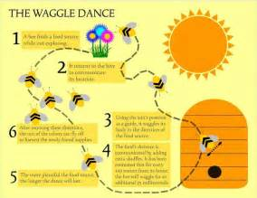 28 best images about bees waggle dance behavior on