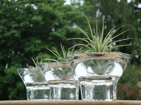 17 best images about glass planters on mercury