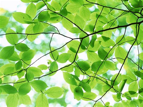 leaves and trees bark of a tree pleasant green leaves free ppt backgrounds