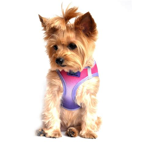 free small puppies american river ombre small harness dinkydogclub