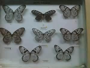 Baju Batik Kumbang museum of chocovanilla