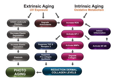 Laptops The New Cause Of Skin Aging by Skin Aging