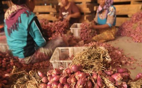 Harga Bibit Bawang Merah Brebes 2017 harga bawang merah nganjuk harga yos