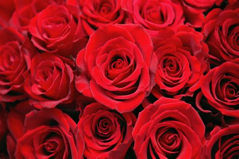 valentines pic roses 2 s day pictures history of