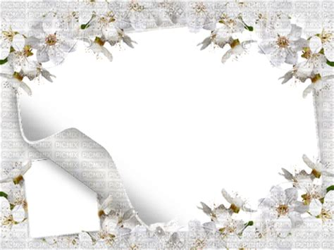 white flowers frames 400x300, white flowers frames 400x300
