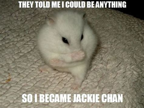 Hamster Meme - 30 most funny hamster meme pictures and photos
