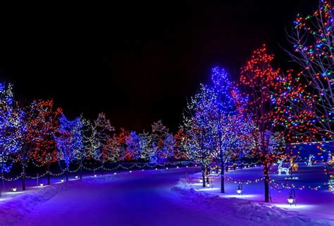 wallpaper winter christmas new year snow street tree