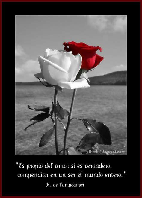 imagenes de rosas violetas con frases propio del amor imagen con frase pik mix