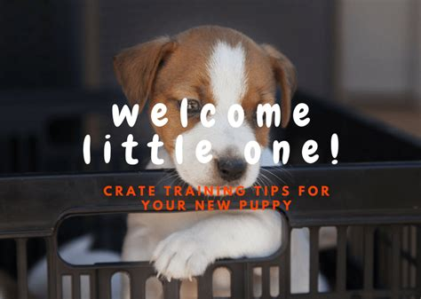 how to crate my puppy crate tips for your new puppy trainthatpooch