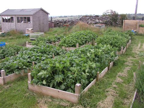 cold weather tour around the plot allotment garden diary