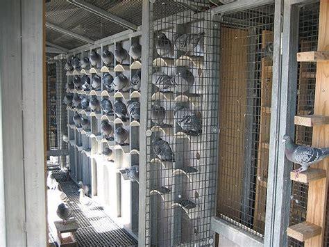 gabbie per colombi criteri base per una colombaia salubre voliere e postazioni