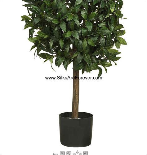 bay laurel topiary 5 mediterranean bay laurel pyramid shaped topiary silk