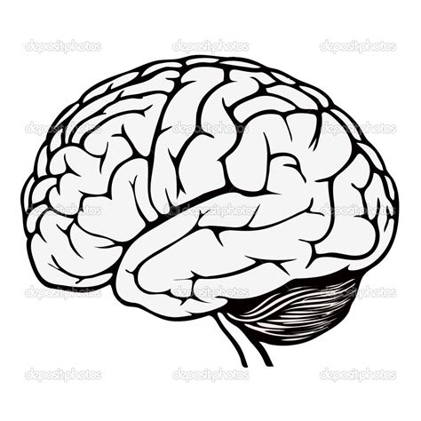 Brain Coloring Page Printable Coloring Image Brain Coloring Pages To Print