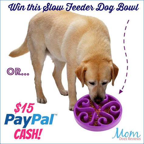 dog will only eat out of my hand elevated dog bowls bad 100 dog will only eat out of my