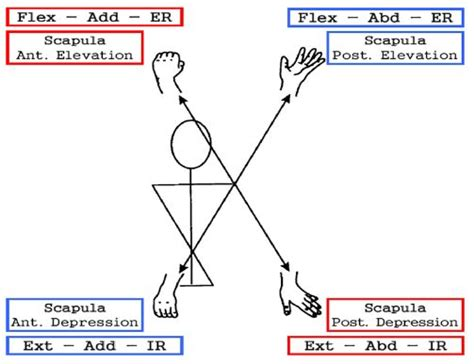 pnf pattern video pnf patterns arm and scapula diagonals physio therapy