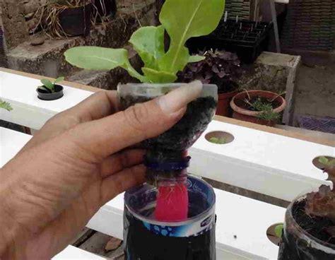 cara membuat hidroponik wick system berbagai macam cara menanam hidroponik