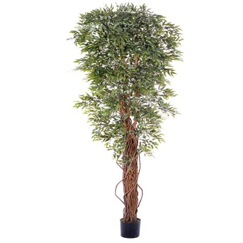 overstock trees 7 foot ruscus tree potted overstock 1859