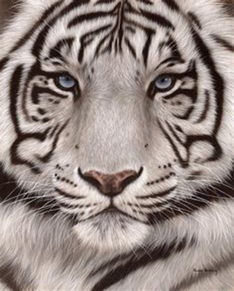 queenstown tattoo white tiger 1000 ideas about white tiger tattoo on pinterest tiger