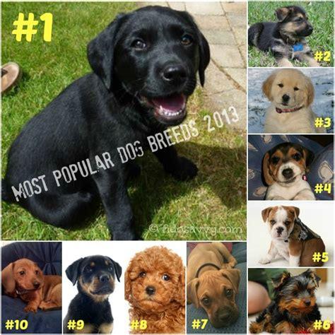 most popular breeds most popular breeds