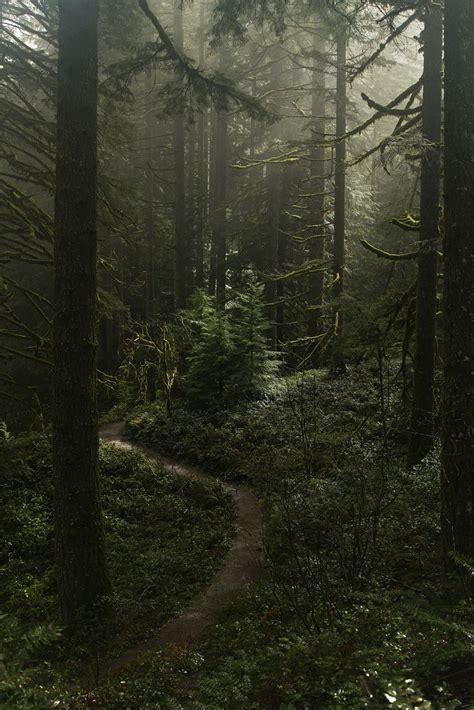 17 best images about decor forest on pinterest trees 25 best ideas about misty forest on pinterest foggy