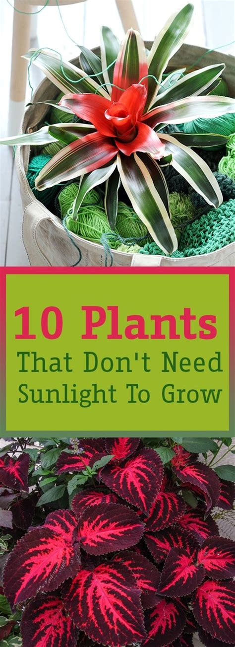 Plants That Don T Need Sunlight To Grow | 10 plants that don t need sunlight to grow v 228 xter