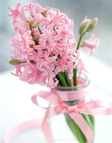 Glass Hyacinth Vases Hyacinth Beautiful Spring Flowers Bring Mood In The House