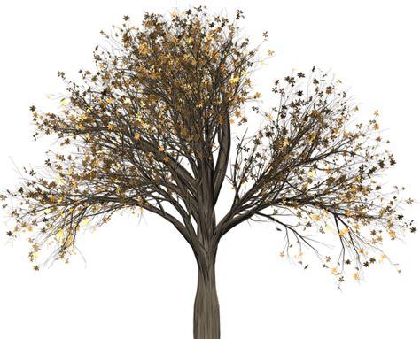 fiori di bach elm elm fiori di bach in menopausa menopausa