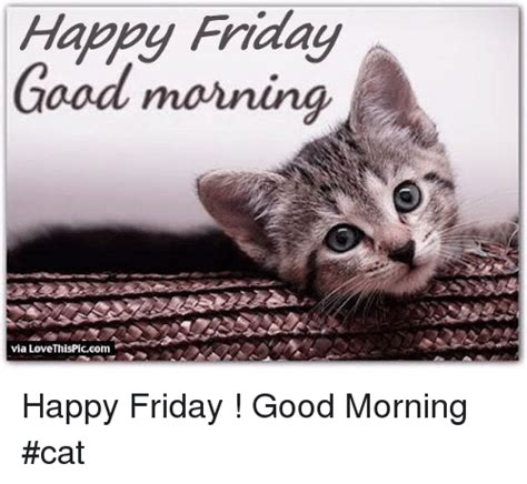Good Friday Meme - happy friday cat meme friday free download funny cute memes