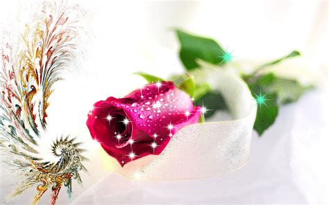 images of love rose hd new love rose hd wallpaper