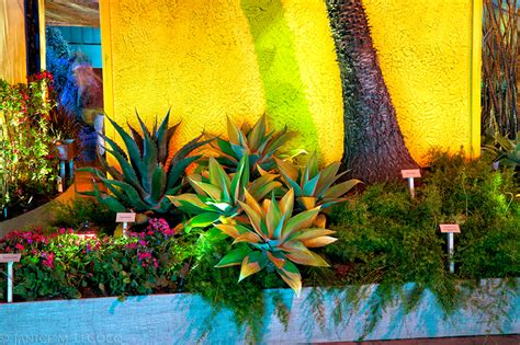 mexican garden ideas for sun garden bed on plants