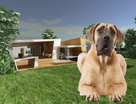 most expensive dog house in the world coolest dog house in the world tevami