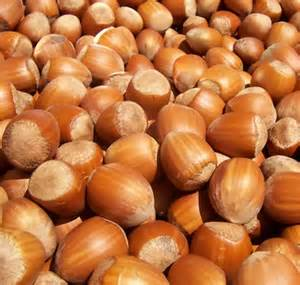 hazelnut benefits side effects and info filbert nuts