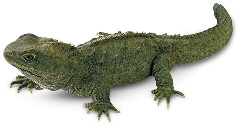 Reptile L by Animals
