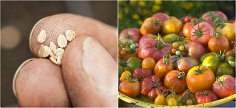 best heirloom seeds 6 reasons you should grow heirloom seeds 6 best places