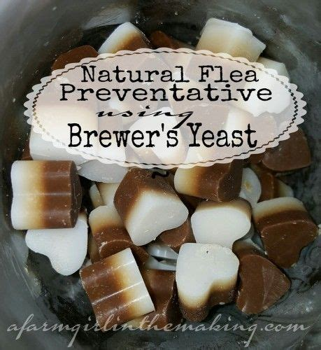 coconut for fleas on dogs fleas brewers yeast and farm dogs on
