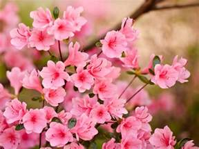 Flower Spring by Spring Flowers Wallpapers Hd Pictures One Hd Wallpaper