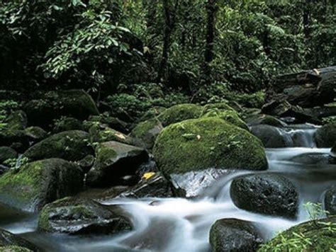 10 Facts About The Forest Floor by 10 Interesting The Rainforest Biome Facts My Interesting