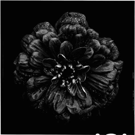 tatuaggi fiori neri black to black flowers 3 fubiz media