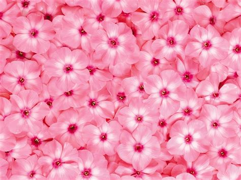 fiori di colore rosa significato colore rosa significato fiori colore