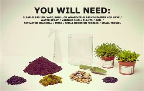 want to make your own terrarium check it out here