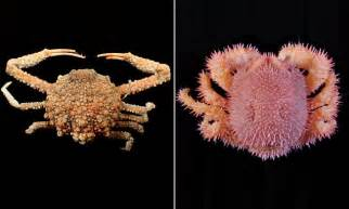 Perangko Taiwan Endangered Mammals Postage Sts Pictorial new species of crab with shaped warts found in taiwan daily mail