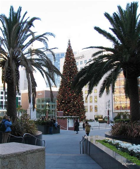 christmas tree lots in san franciso san francisco tree lots lights decoration