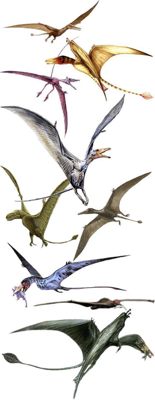 dinosauri volanti dinosauri volanti