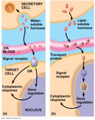 biology chapter 45: hormones and the endocrine system