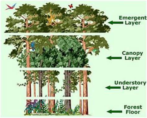 rainforest diagram plants of the tropical rainforest
