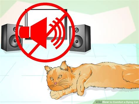 how to make a dying cat comfortable at home how to comfort a dying cat 13 steps with pictures wikihow