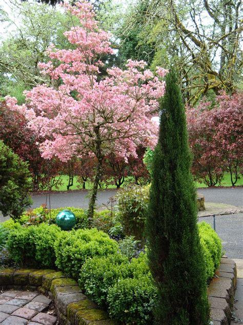 backyard tree cherry blossom tree in the backyard yard decor