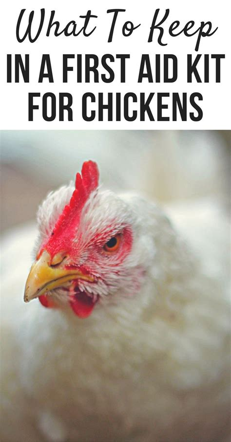 how to take care of backyard chickens 25 best ideas about backyard chickens on pinterest