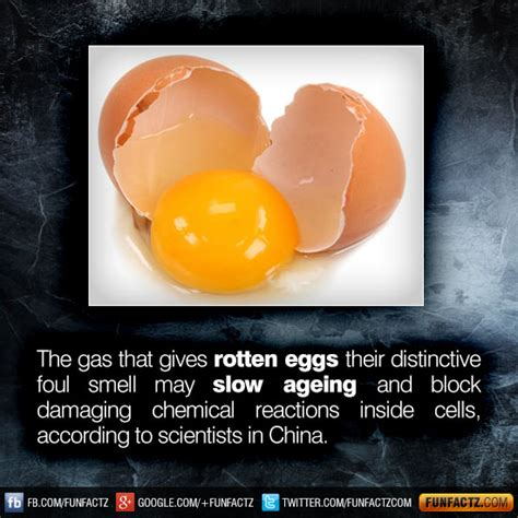 rotten egg smell in house rotten egg smell in pictures inspirational pictures