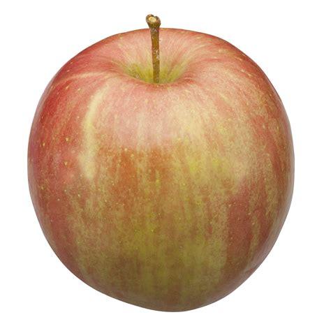 apple fuji michigan apple varieties michigan apple committee